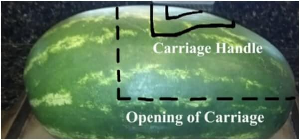 Turn-watermelon-around-and-use-a-marker-or-pen-to-outline-the-opening